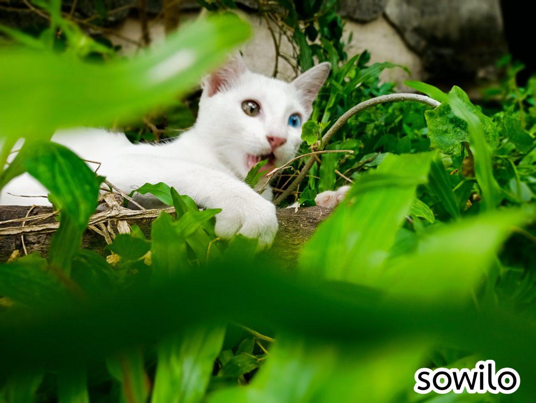 ถ่ายรูปแมว ด้วยสมาร์ทโฟน ก็สวยได้เหมือนถ่ายด้วยกล้องดีๆ