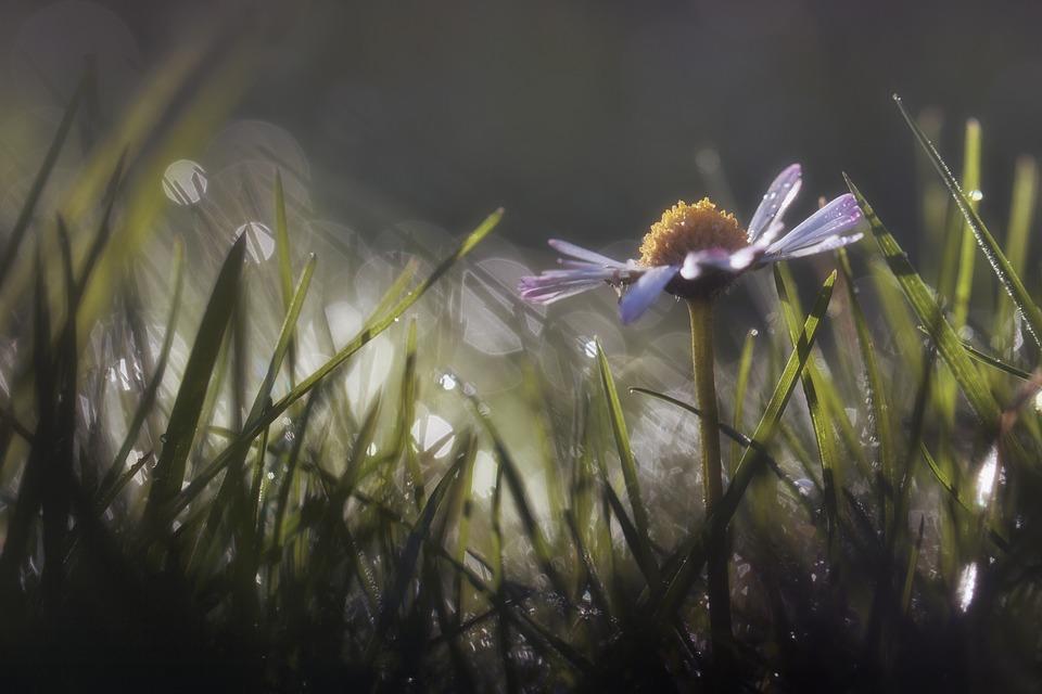 รูปถ่ายดอกไม้