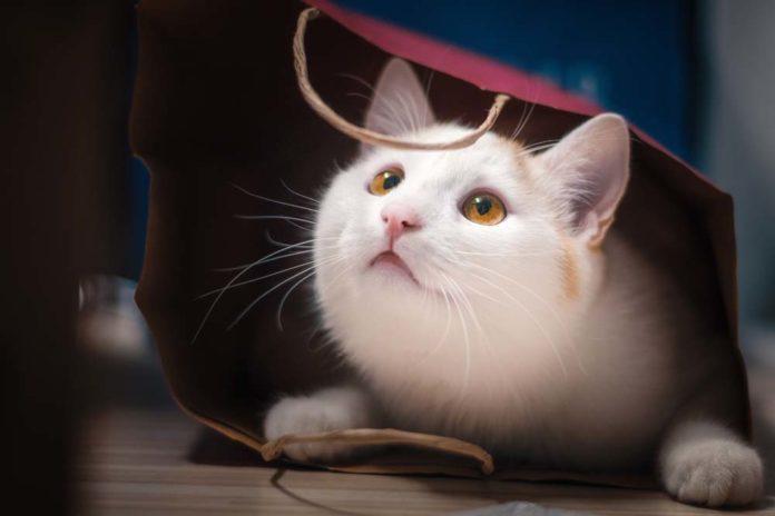 ภาพแมว