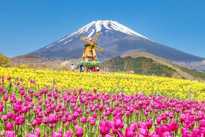 การท่องเที่ยว ดอกไม้