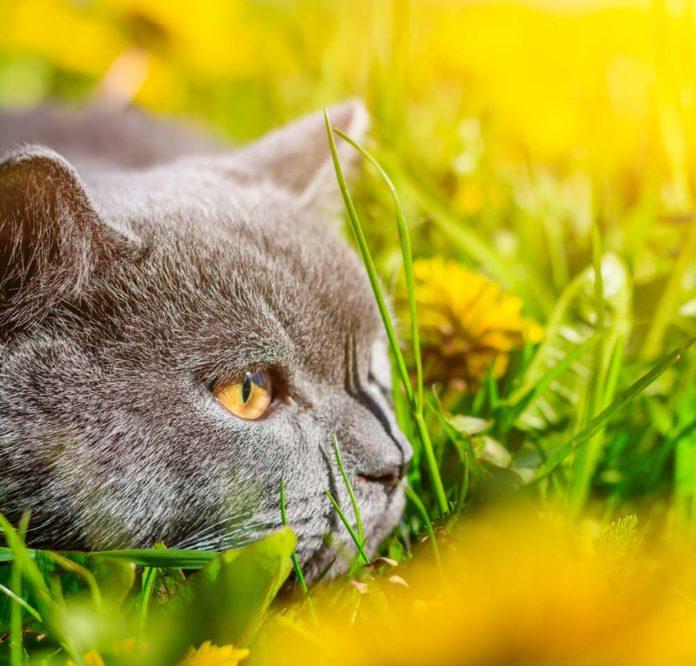 เทคนิคการถ่าย ภาพแมว ที่บ้านให้มีความสวยงามและดึงความน่ารัก