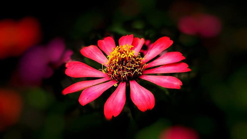 แนะนำถ่ายรูปดอกไม้