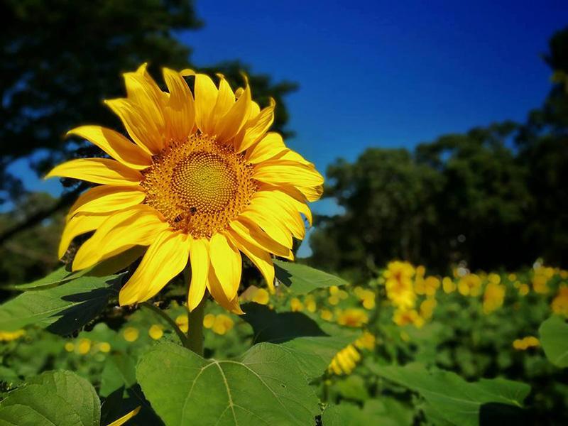 ถ่ายรูปดอกไม้ให้สวย ด้วยกล้องสมาร์ทโฟน ทำอย่างไรให้ภาพคมชัด