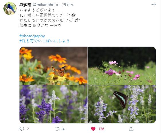 ถ่ายรูปแนวธรรมชาติ ดอกไม้