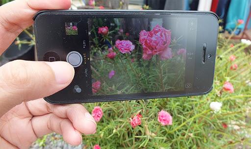 ถ่ายรูปดอกไม้
