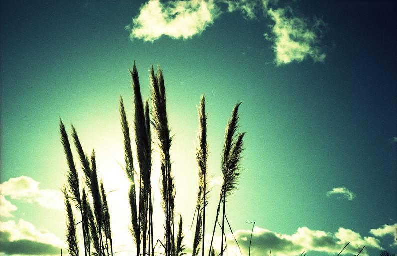 """Mju II""-ดอกหญ้า"