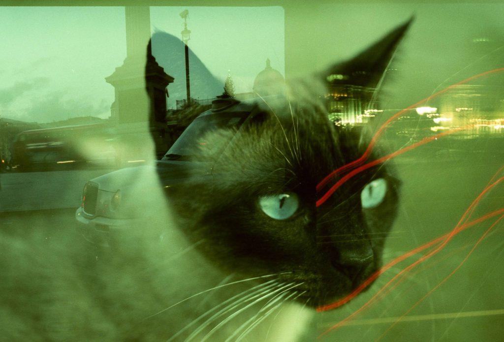 Electro 35 CC-ภาพแมว